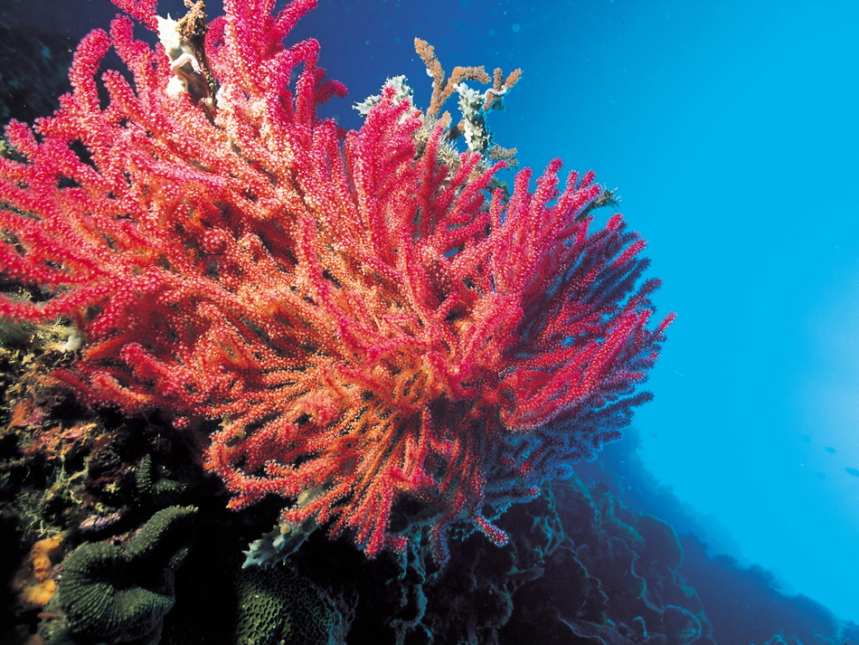 1264439835_13_coralls