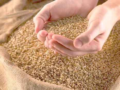 урожай, цена, зерно, экспорт, сельское хозяйство, правительство